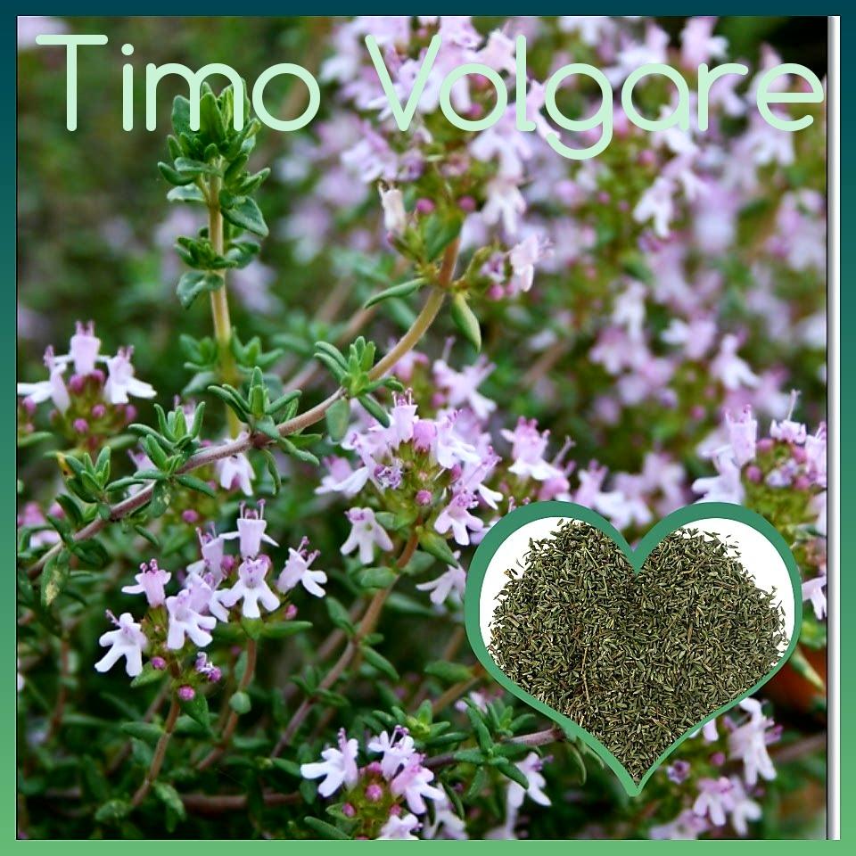 Timo volgare: tutte le proprietà di un arbusto aromatico ...